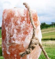 3 Stück Biova Leckstein für Tiere 2-3 kg in Premiumqualität